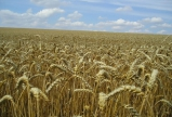 President Ilham Aliyev: This year has been declared Year of Agriculture