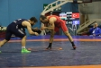Azerbaijani wrestlers take 4 medals in Istanbul tournament