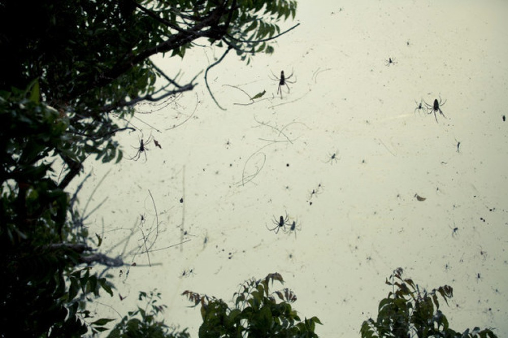 Tiny spiders 'rain' down in Australian town
