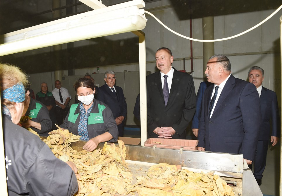President Ilham Aliyev viewed tobacco processing plant in Zagatala VIDEO