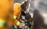 Intense moment firefighters resuscitate a lifeless dog after pulling it from a burning apartment